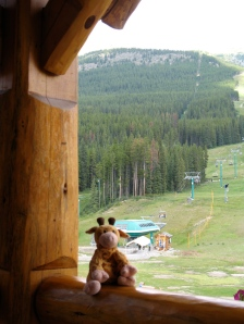 Gilbie at the Ski Hill in the summer